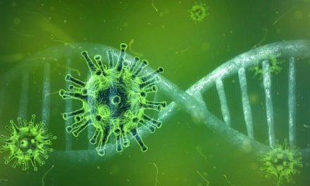 Information zur Corona Virus Epidemie